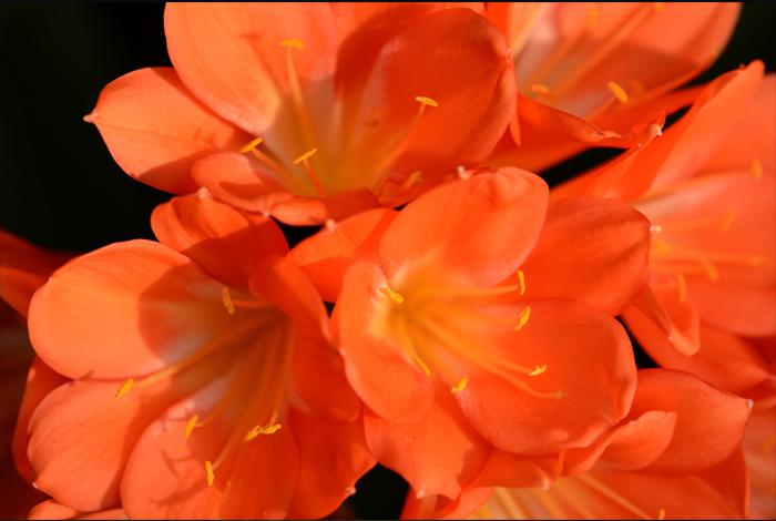 주황색 꽃잎을 가진 꽃의 접사 사진