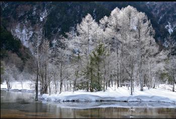 풍경이미지:눈이 덮힌 나무 사진