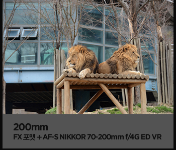 200mm. fx포맷 + af-s nikkor 70-200mm f/4g ed vr