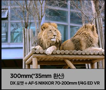 300mm(*35mm 환산) dx 포캣 + af-s nikkor 70-200mm f/4g ed vr