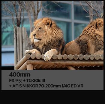 400mm. fx포맷 + tc-20e ⅲ + af-s nikkor 70-200mm f/4g ed vr