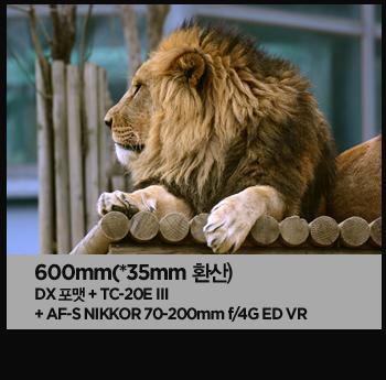 600mm(*35mm 환산). dx포맷 + tc-20e ⅲ + af-s nikkor 70-200mm f/4g ed vr