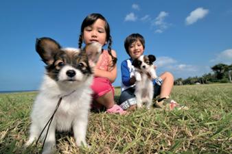 사진:푸른하늘과 잔디밭을 배경으로 강아지를 안고 있는 남자아이와 강아지를 쓰다듬고 있는 여자아이 모습