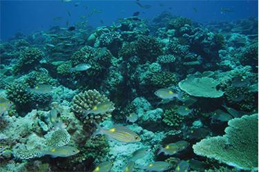 자동 왜곡 보정 예제이미지 : 수조근처 물고기