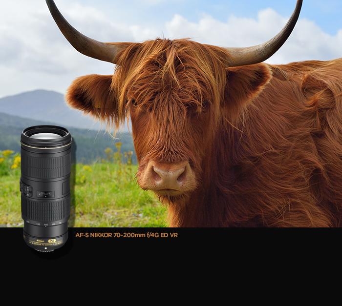 AF-S NIKKOR 70?200mm f/4G ED VR 렌즈 샘플