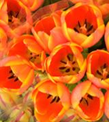 노랗고 주황빛의 꽃이 피어진 사진