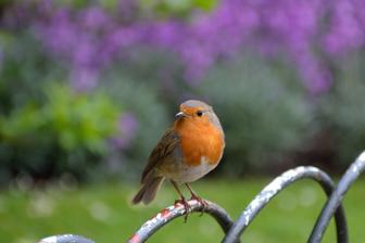 R524렌즈로 찍은 이미지 예제 : 새