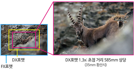 DX 포맷과 FX 포맷
