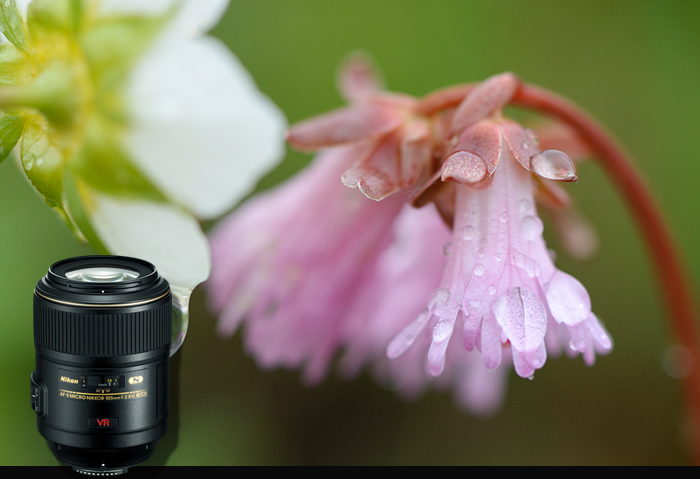 AF-S VR Micro Nikkor ED 105mm f/2.8G (IF) 렌즈 샘플